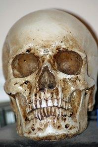 Skull-boy Ace Reporter